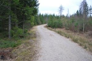 skogspromenad