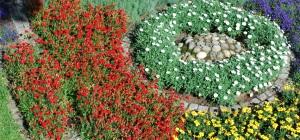 blommor o sten