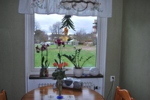 orkideeköksfonster