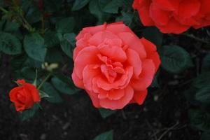 Alexander-rosen